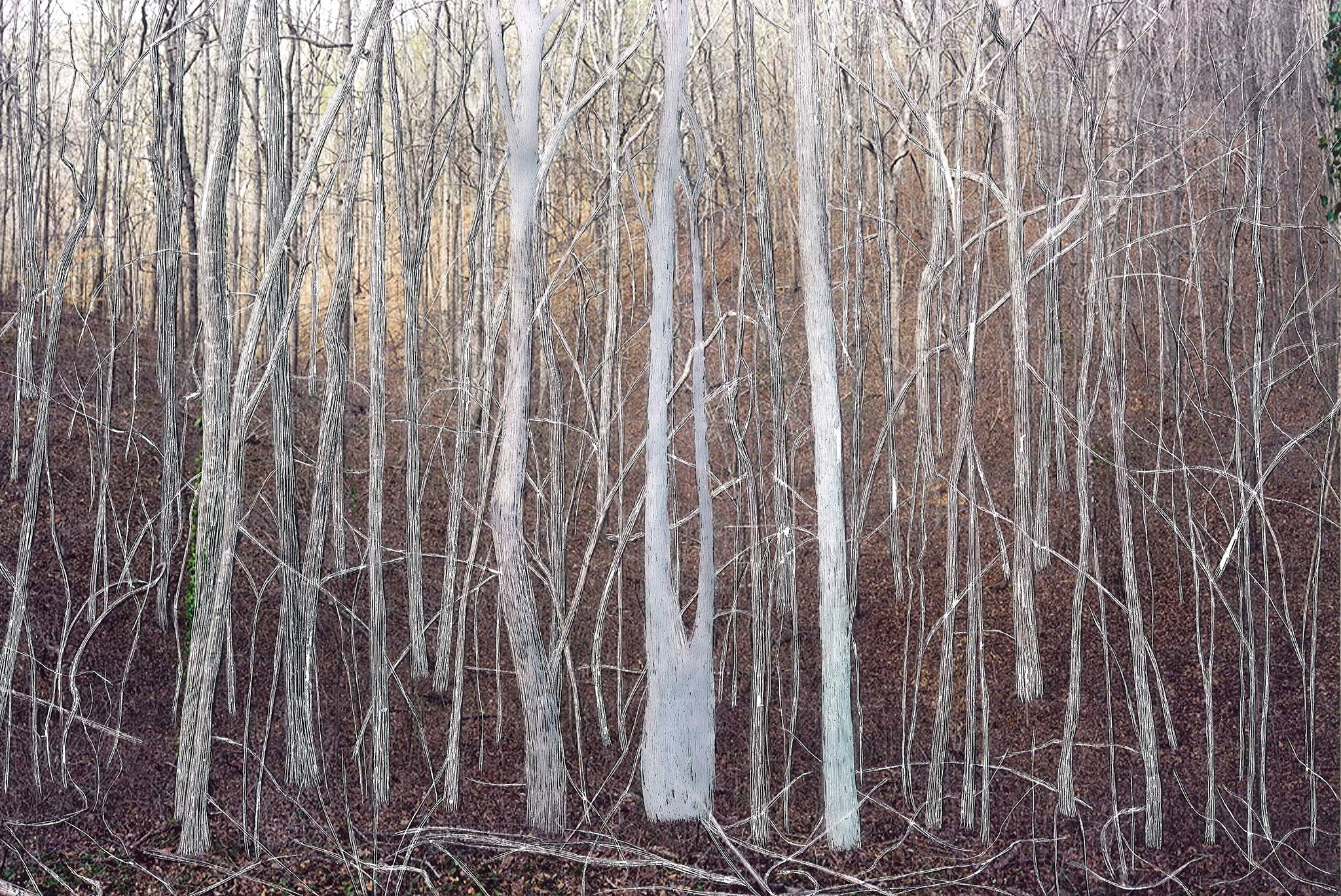 Woods / Exhibition of photographs and drawings by Svetlana Ždrnja / 17. Januar 2015